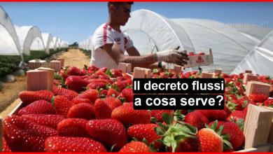 Photo of DECRETO FLUSSI : a cosa serve?